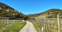 Wandern am Panoramaweg Rossatz   Wachau Inside Vineyard, Country Roads, Outdoor, Hiking, Destinations, Vacation, Viajes, Outdoors, Vine Yard