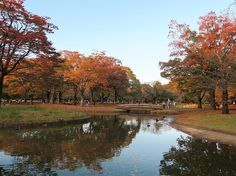 Yoyogi park the fourth biggest park in Tokyo (134 acres). In 1964 the area was used for the Tokyo Olympics housing the main athletes village. After the Olympics it was turned into Yoyogi Park. Today the park remains a popular Tokyo destination. #Japan #Tokyo #travel #yoyogi #park #kodak_photo #vsco #autumn