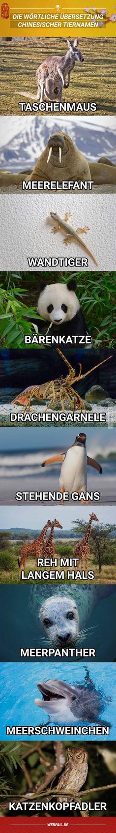 Chinesische Tiernamen ins Deutsche übersetzt | Webfail - Fail Bilder und Fail Videos