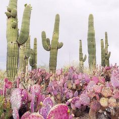 15 Awesome Indoor and Outdoor Cactus Plants Garden Ideas We can plant Cactus on the Garden, we can put it on indoor or outdoor area, or we can put cactus plant on the small area and make it more unique and stunning. Check our collections about Cactus Gar… Outdoor Cactus Garden, Indoor Cactus, Cacti Garden, Green Garden, Desert Dream, Desert Rose, Plants Are Friends, Cactus Y Suculentas, Cacti And Succulents