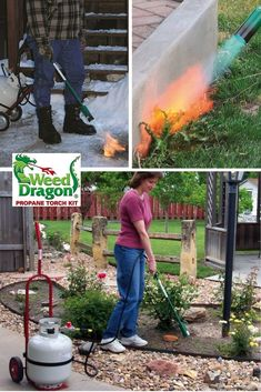 The WEED DRAGON is the perfect propane torch kit for home and garden use. We've regulated the flame and BTU down for homeowners who don't need the power of a farm torch and we've even assembled it. This torch kit is still plenty powerful for lots of toug Farm Gardens, Outdoor Gardens, Get Rid Of Dandelions, Organic Weed Control, Creative Landscape, Living Off The Land, Garden Tools, Garden Ideas, Backyard Ideas