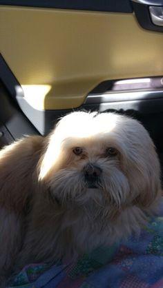Sam : lhasa sempre in auto con noi!!!