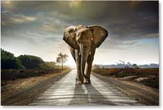 5 Pieces Multi Panel Modern Home Decor Framed Africa Elephant Animal Wall Canvas Art Escalier Art, Elephant Afrique, Elephant Wallpaper, Ivory Trade, Elephant Pictures, Elephant Images, Elephant Walk, Elephant Canvas, Elephant Shower