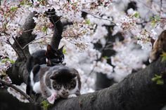 Cats on the tree in Ueno Park by yasoki, via Flickr