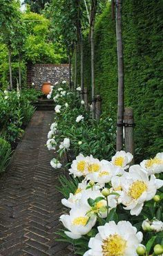 8 Jaw-Dropping Cool Tips: Backyard Garden Inspiration Fence whimsical garden ideas old trees.Whimsical Garden Ideas Old Trees modern backyard garden living spaces. Beautiful Gardens, Beautiful Flowers, Beautiful Gorgeous, White Gardens, Garden Cottage, Garden Spaces, Garden Landscaping, Garden Path, Landscaping Ideas