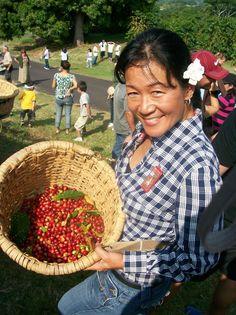 Kona Coffee. Yes, they grow coffee in #Hawaii! #onlyinhawaii http://www.experiencehawaii.com/hawaii-tours/volcano-tour-kona-coffee-and-craters