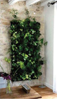 A living wall. Indoor Garden  plants