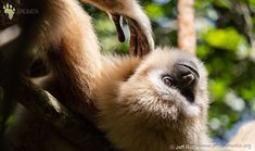hanging out at monkey land . Wildlife Photography, Hanging Out, Monkey, African, Animals, Instagram, Baby Pets, Jumpsuit, Animales
