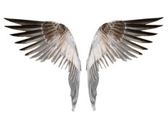 Wings 4 PNG by EveLivesey.deviantart.com on @deviantART
