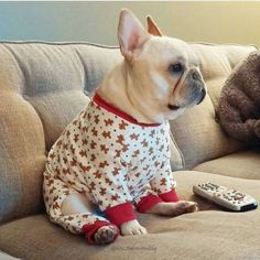 Image result for dressed up frenchie