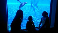 #travel Family trip to Las Vegas! Don't Forget to Visit The Secret Garden and Dolphin Habitat at the Mirage.
