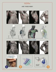 Anatomy for Sculptors Understanding the Human Figure Muscle Anatomy, Body Anatomy, Anatomy Study, Anatomy Art, Anatomy Reference, Human Anatomy, Art Reference, Male Figure Drawing, Body Drawing