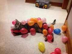 This party animal who needs to calm down with his balloon obsession. | 17 Cats Who Need To Get A Grip