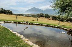 Imhoffs Gift, Kommetjie Family restaurant Cape Town, Golf Courses, Restaurants, Gift, Restaurant, Gifts, Presents