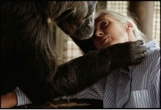 michael nichols - jane goodall with la vielle, an aged female half crazed from spending years alone in a congolese zoo. in 1994 the jane goodall institute moved la vielle to a happier home—a sanctuary nearby  explore/donate: the jane goodall institute