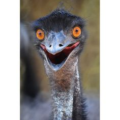 Emu. Could not find a picture of it as a dinner but you can get it in Australia.