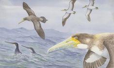 The Guardian. 'Amazing' ancient seabird fossil found in New Zealand sparks rethink of bird's evolution Extinct Birds, Extinct Animals, Bird Bones, Living In New Zealand, Sea Birds, Canterbury, History Museum, Bird Species, The Guardian
