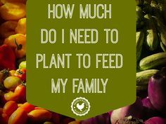How much do I need to plant to feed my family? How many seeds/plants do I need to plant if I want to feed my family fresh produce during the growing season AND preserve enough to last the rest of the year.