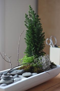 this is perfect for winter and for work... the times when you can't be in your garden.  false cypress, desktop zen garden, gardenista. Zen garden for men at work or women at work too who don't want something girly