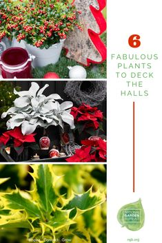 6 Fabulous Plants to Deck the Halls - 6 Fabulous Plants to Deck the Halls - think outside the big box store's typical holiday displays and create interesting, unusual living arrangements with these gorgeous offerings. Gardening For Beginners, Gardening Tips, Garden Plants, Indoor Plants, Organic Gardening, Vegetable Gardening, Angel Christmas Tree Topper, Box Store, Unusual Plants