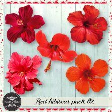 Elements - red hibiscus vol 02 - Scrap Angie #CUdigitals cudigitals.comcu commercialdigitalscrapscrapbookgraphics