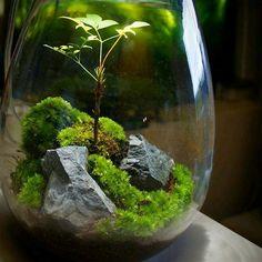 #AquariumLightingLEDPlants