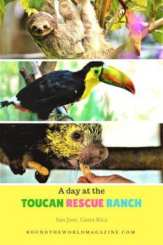 Toucan Rescue Ranch, Sloth Sanctuary, Costa Rica