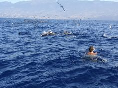 Swimming with dolphins, Madeira