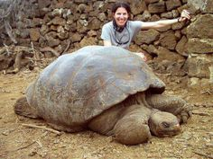 """The Pinta Island tortoise is the rarest animal in the world.  There is ONLY ONE LEFT on Earth. His name is """"Lonesome George"""". Lonesome George is the last member of the Pinta Island subspecies of Galapagos tortoises. He was discovered in 1972, and brought to the Charles Darwin research station on the island of Santa Cruz. He is roughly 90 to 100 years old.  Correction : Just found that he passed away last year"""