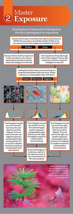 Free macro photography cheat sheet - part 2 | This is a hi-r… | Flickr