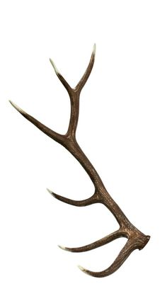 This Elk Faux Antler from Cast Horn Designs is hand-stained & finished and makes a beautiful addition to your rustic decor. Elk Horns, Moose Antlers, Shed Antlers, Deer Antler Chandelier, Antler Art, Antler Drawing, Elk Tattoo, Antler Tattoos, Deer Girl