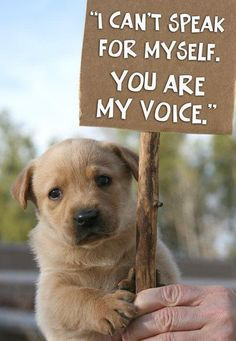 Stop Animal Abuse! This is one thing that I do not tolerate! Makes me so sick to think that someone could hurt something so beautiful. All animals are special!