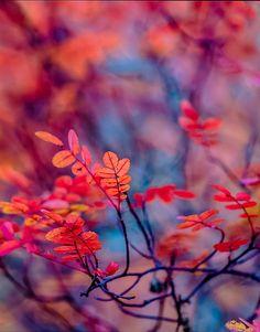 http://j321.35photo.ru/photo_1033404/#mainPhoto789755/1033404