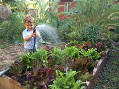The Best Veggies and Herbs to Grow in the Fall >> http://www.diynetwork.com/made-and-remade/learn-it/vegetables-to-plant-in-the-fall?soc=pinterest
