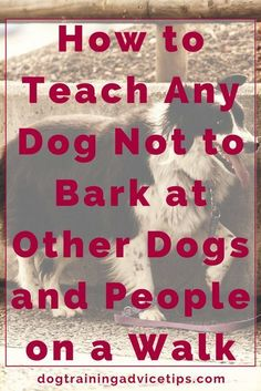 How to Teach Any Dog Not to Bark at Other Dogs and People on a Walk | Dog Training Tips | Dog Obedience Training | Dog Training Ideas | http://www.dogtrainingadvicetips.com/teach-dog-not-bark-dogs-people-walk #DogPaw