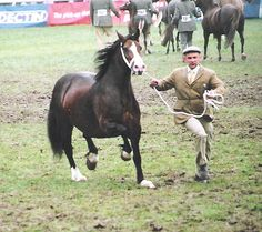 Photo Archive Nebo Miss Maple Royal Welsh Show Mare 2007 : Rainhill Welsh Cobs