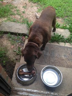 http://aya-katz.hubpages.com/hub/Not-Fit-for-a-Dog-to-Eat-The-Dog-Food-Dilemma