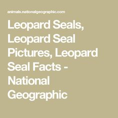 Leopard Seals, Leopard Seal Pictures, Leopard Seal Facts - National Geographic