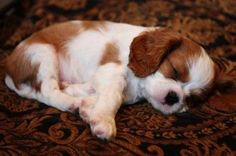 5 Dog breeds with the cutest puppies, you may guess one!