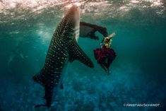 Photographer Kristian Schmidt - Hannah Fraser dressed in fashion faces a giant Whale Shark