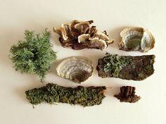 Woodland Lichen and Mushroom Collection. Earthy organic home decor, terrarium supplies. via Etsy Terrarium Supplies, Fungi, Natural World, Back Home, Botany, Slytherin, Earthy, Flora, Stuffed Mushrooms