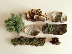 Woodland Lichen and Mushroom Collection. Natural specimen collection.