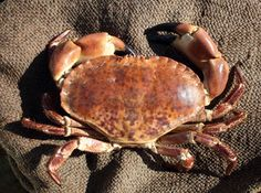 Visit Norfolk Put Together A List Of The Top 10 Norfolk Foods. We're Fans Of The Famous 'Cromer Crab'