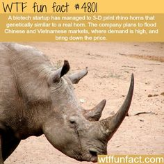 Rhinos - Animals. This would be cool. It could save Rhinos!
