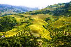 Rice terraces in Mu Cang Chai