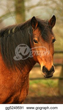 """Brown Horse""- Horse Stock Photo from Gograph.com Horse Horse, Brown Horse, Horses, Horse Photos, Stock Photos, Animals, Image, Andalusian Horse, Animales"