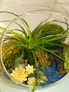 Air Plant Hanging Glass Globe KIT with GIFT by LookingSharpCactus #lookingsharpcactus