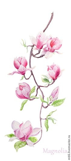 Купить Акварельная иллюстрация: Ветка цветущей магнолии. - розовый, магнолия, цветущая магнолия, веточка магнолии