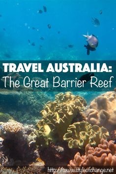 In October, I snorkeled at the Great Barrier Reef near Cairns, QLD, Australia, and it was one of the most amazing experiences of my life. This past Fall, I studied at the University of Canberra in …