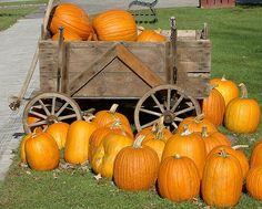 Pumpkin Wagon Ride by rich66 ~~, via Flickr